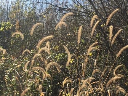 grass-sun