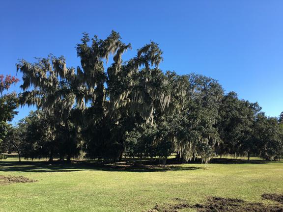 life oak