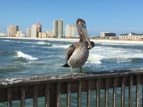 Juan on the pier