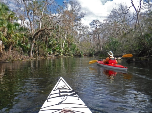 wekiwa springs kayaking 1