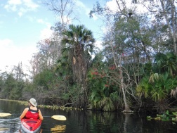 wekiwa springs kayaking deb 2