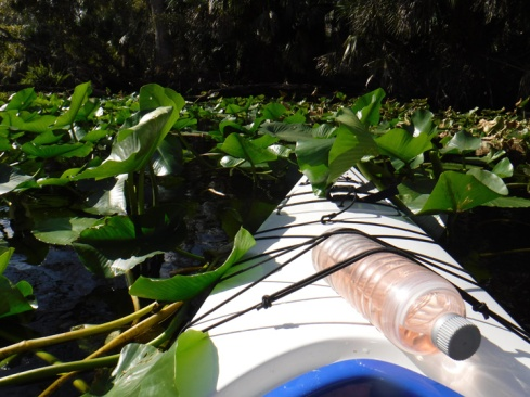 wekiwa springs kayaking folage 4