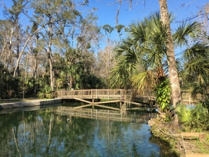 wekiwa springs state park spring bridge