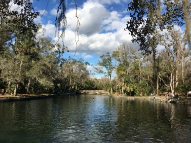 wekiwa springs state park springs swimming
