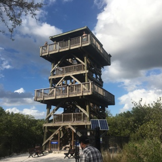 Forest viewing tower