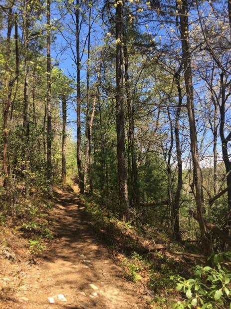 Flat Creek Loop