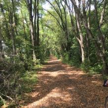 Four Freedom Trail 2