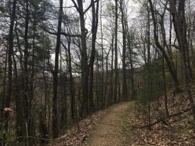 Vogel SP trail 13