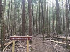 Vogel SP trail 2