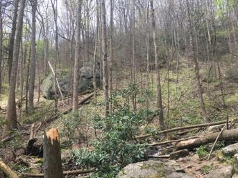 Vogel SP trail 21
