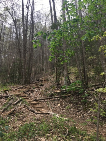 Vogel SP trail 22