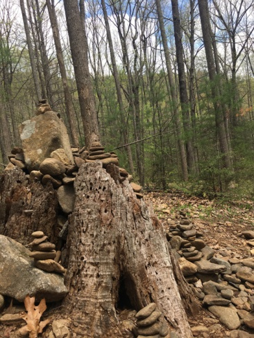 Vogel SP trail 23