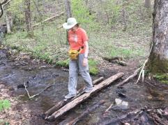 Vogel SP trail 6