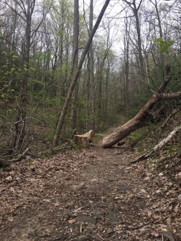 Vogel SP trail 7