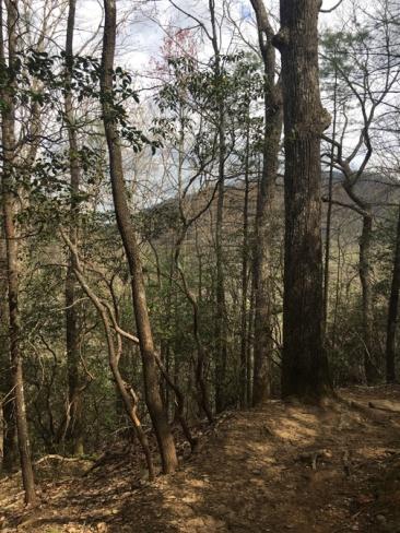 Vogel SP trail 8