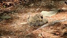 snake 4 copy