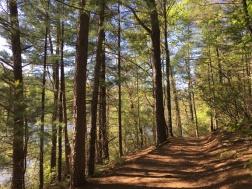 Unicoi State Park 2