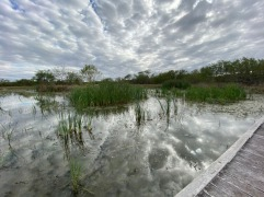 Estero Llana Grande State Park