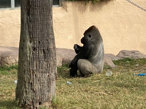 Zoo cut002
