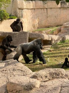 Zoo cut003