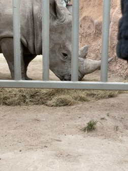 Zoo cut010