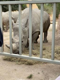 Zoo cut011