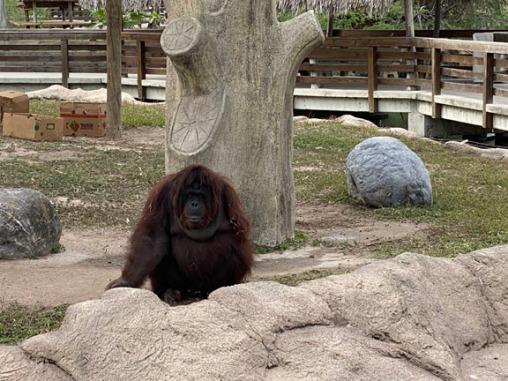 Zoo cut014