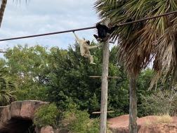 Zoo cut015