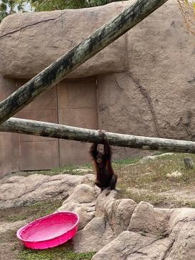 Zoo cut018