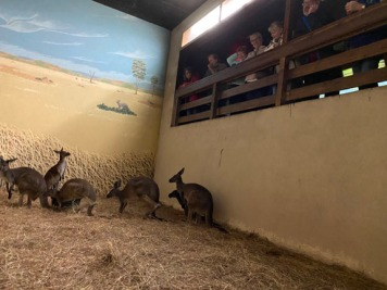 Zoo cut019