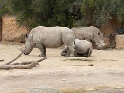 Zoo cut049