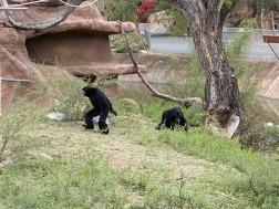 Zoo cut051
