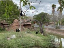 Zoo cut052