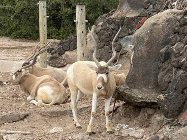 Zoo cut054