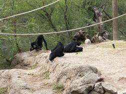 Zoo cut057