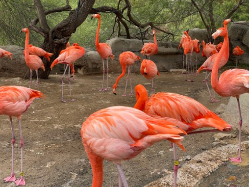 Zoo cut059