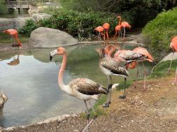 Zoo cut061