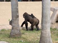 Zoo cut065