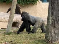 Zoo cut066