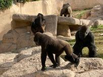 Zoo cut068