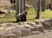 Zoo cut069