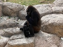 Zoo cut070