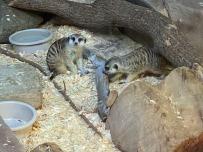 Zoo cut071