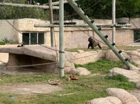 Zoo two024