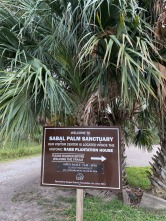 Sabal Palms Sanctuary007